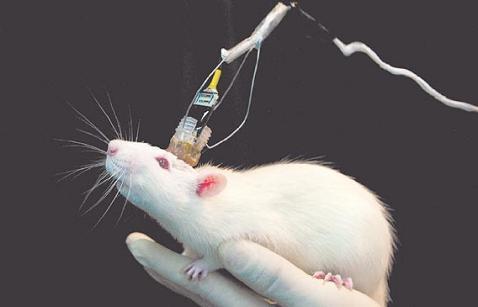 La explotación animal - Experimentación científica