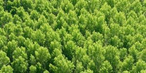 Plantas forestales: qué son, tipos y nombres