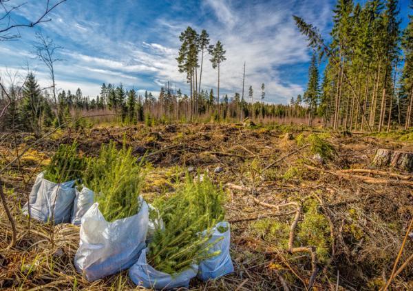 Plantas forestales: qué son, tipos y nombres - Qué son las plantas forestales y sus características