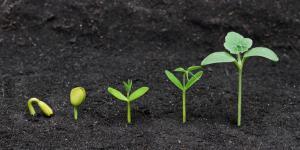Plantas monocotiledóneas: qué son y ejemplos