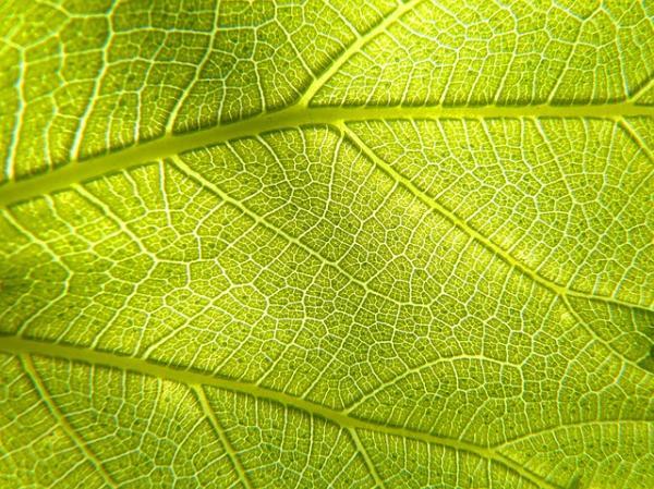 Diferencia entre la fotosíntesis y la respiración de las plantas