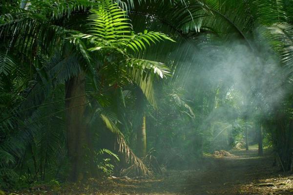 Factores bióticos y abióticos de la selva - Factores abióticos de la selva