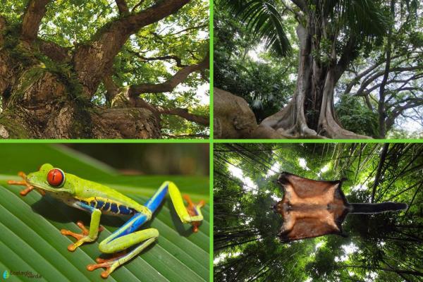 Factores bióticos y abióticos de la selva - Factores bióticos de la selva