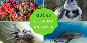 Reino Animalia: qué es, características, clasificación y ejemplos