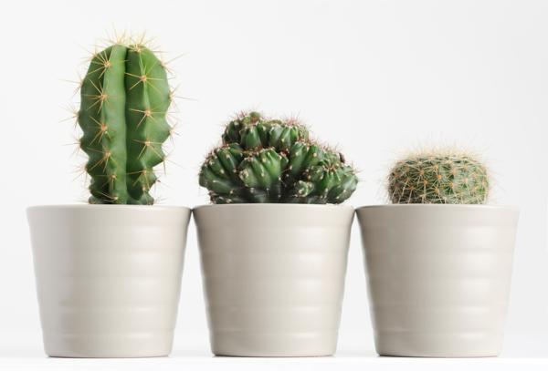 Fungicidas caseros para cactus - Hongos que afectan a los cactus
