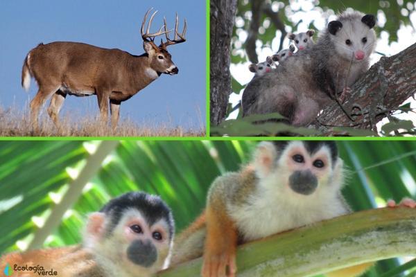 Flora y fauna de Costa Rica - Fauna de Costa Rica