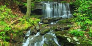 Selva baja: fauna y flora