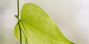 Qué son los estomas de una planta