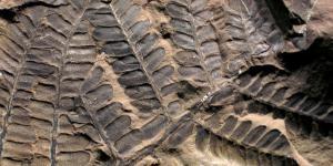Paleobotánica: qué estudia y su importancia