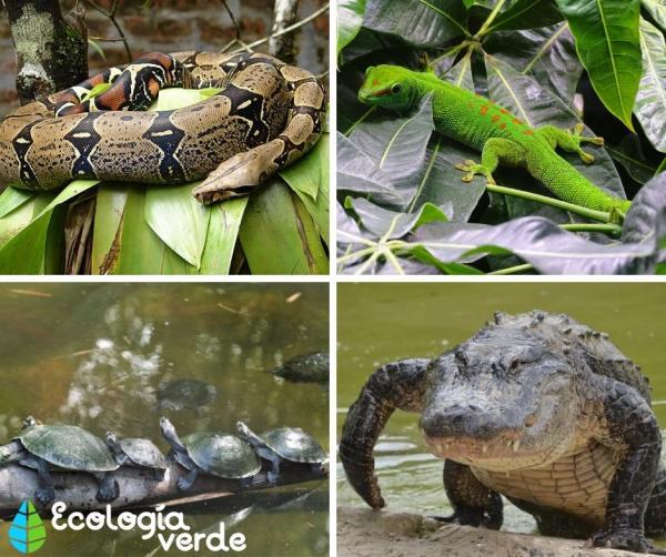 Bosques tropicales: características, flora y fauna - Bosque tropical: fauna