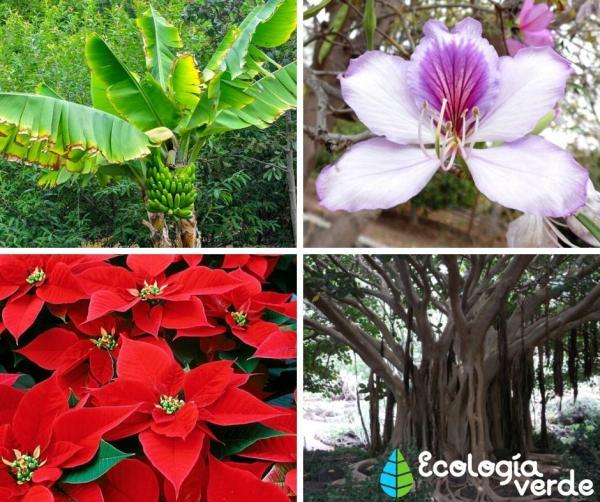 Bosques tropicales: características, flora y fauna - Bosque tropical: flora