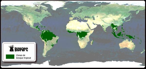 Bosques tropicales: características, flora y fauna - Qué son los bosques tropicales - definición y características