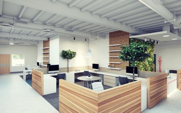 Cómo cuidar el medio ambiente en el trabajo - Plantas para la oficina para ayudar al medio ambiente
