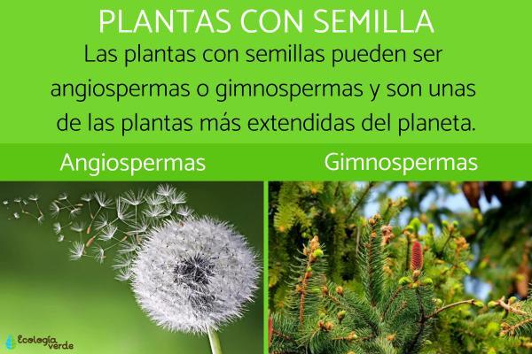 Plantas con semilla: clasificación y ejemplos