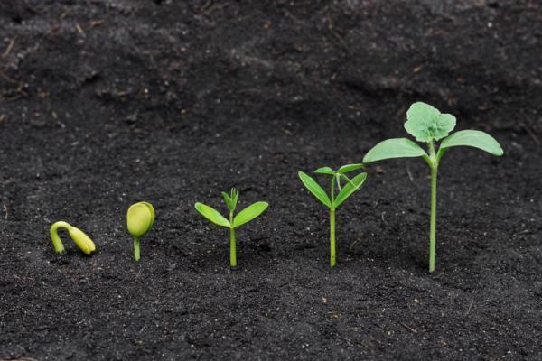 Plantas con semilla: clasificación y ejemplos - Qué son las plantas con semilla y sus características
