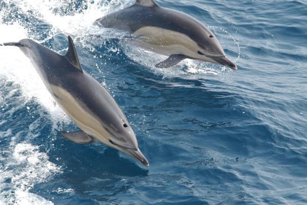 Los 10 animales más inteligentes del mundo - El delfín