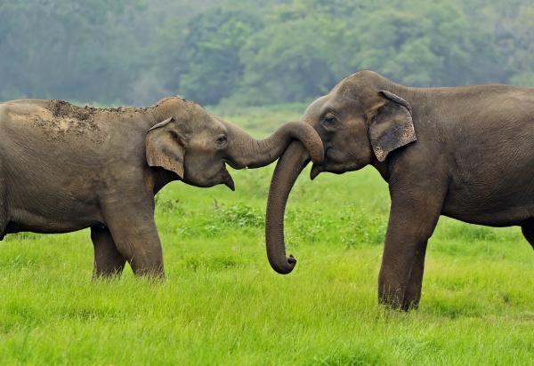 Los 10 animales más inteligentes del mundo - El elefante