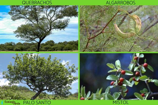 Bosque chaqueño: características, flora y fauna - Flora del bosque chaqueño