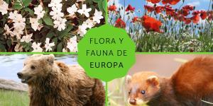 Flora y fauna de Europa