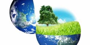 Plantas que purifican el aire que respiramos