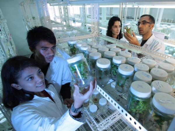 Ramas de la biología y qué estudian - Qué estudian las ramas de la biología: los campos de estudio