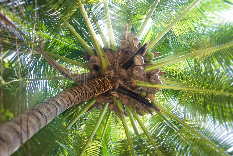 Cómo plantar una palmera y sus cuidados - guía práctica