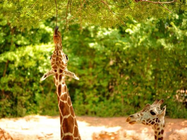 Qué es la selección natural y ejemplos - Qué es la selección natural: definición y ejemplo