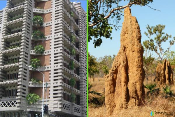 Biomímesis: qué es y ejemplos - Aprendiendo de los termiteros
