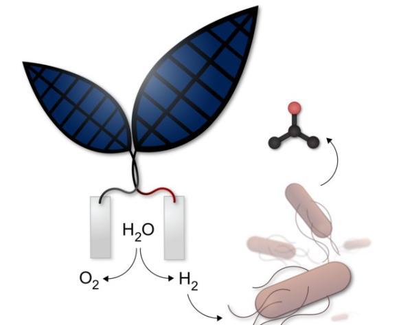 Biomímesis: qué es y ejemplos - Fotosíntesis artificial