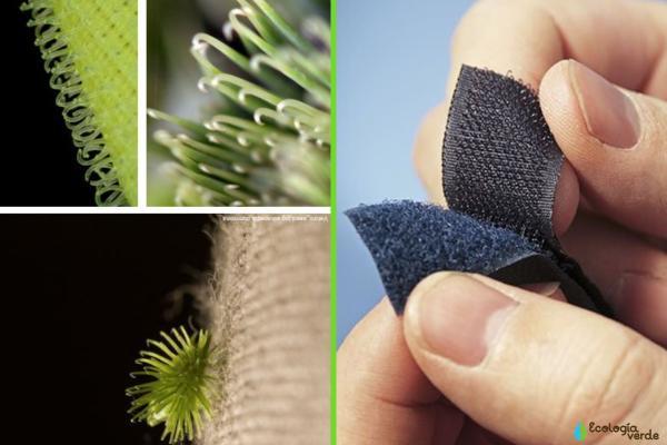 Biomímesis: qué es y ejemplos - Otros ejemplos de biomímesis