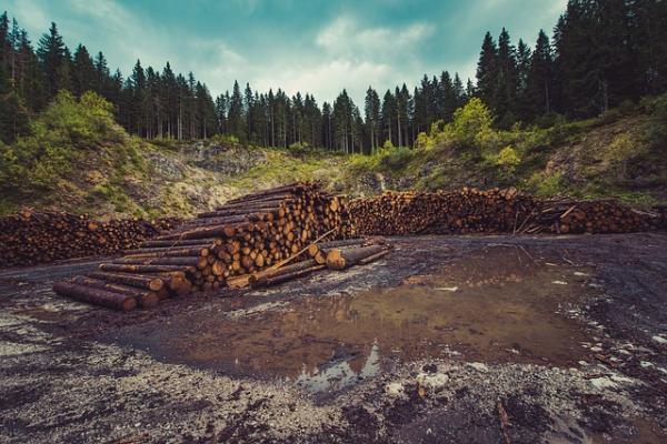 Sobreexplotación de los recursos naturales: causas y consecuencias - Causas de la sobreexplotación de los recursos naturales