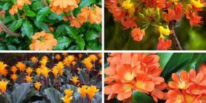 9 flores naranjas