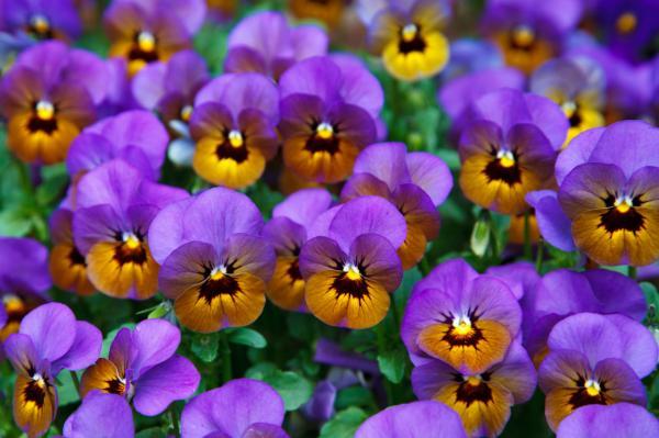 +15 plantas de otoño para el jardín