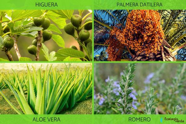 Plantas xerófitas: qué son, características y ejemplos - Ejemplos de plantas xerófitas