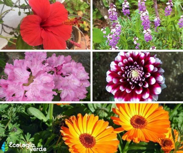 +15 plantas de otoño para el jardín - Más plantas de otoño para el jardín