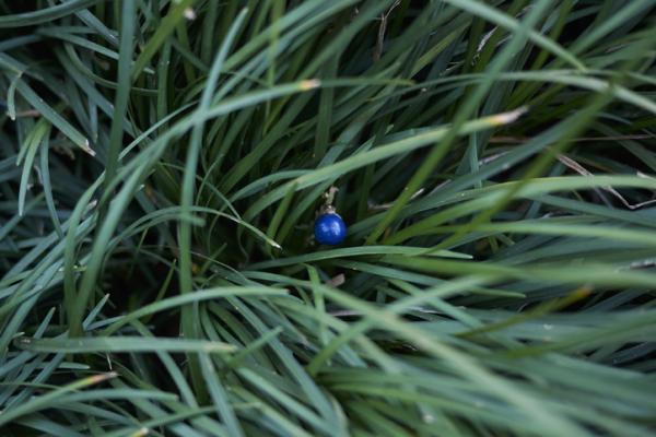 Plantas de exterior resistentes al frío y calor - Convalaria u Ophiopogon japonicus