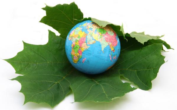 Biodegradabilidad: ejemplos de productos biodegradables - Qué es la biodegradación
