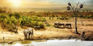 Ecosistema en equilibrio: qué es y cómo se mantiene