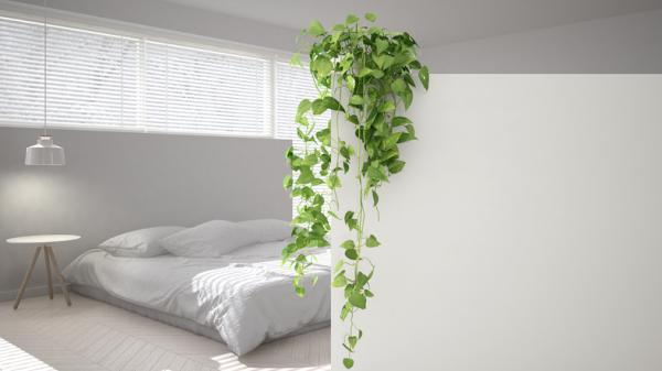 Plantas para el dormitorio según el Feng Shui - Toxicodendron radicans o hiedra inglesa