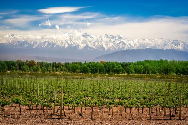 Recursos naturales en Argentina - Abundancia de tierras agrícolas y ganaderas