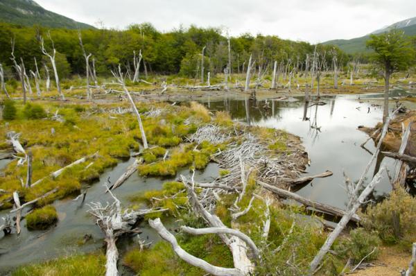 Recursos naturales en Argentina - Recursos forestales