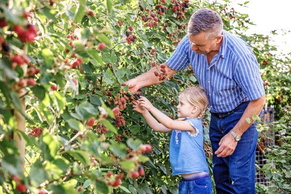 Actividades ecológicas al aire libre - Recoger moras y otros frutos