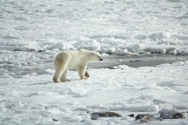 Hielos perpetuos: clima, flora, fauna e imágenes - Imágenes de los hielos perpetuos más increíbles del planeta