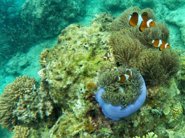 Diferencia entre biosfera, ecosfera y ecosistema - Ecosistema: qué es y sus características