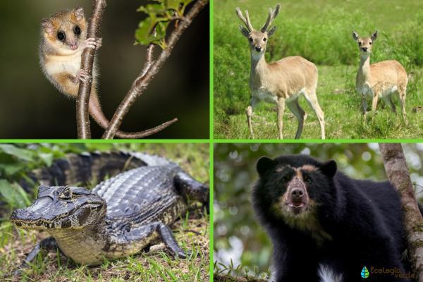 Flora y fauna de Argentina - Fauna de Argentina