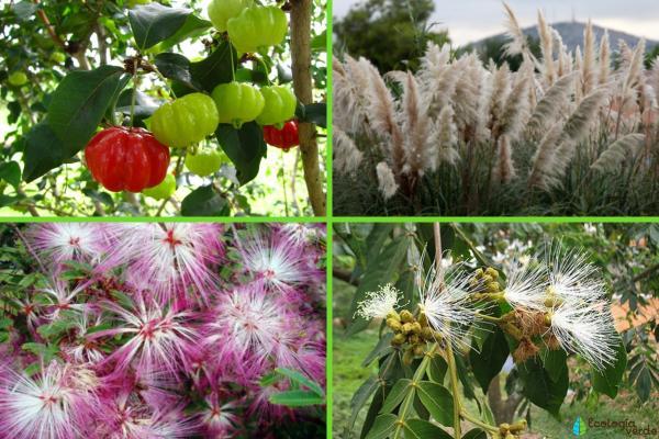 Flora y fauna de Argentina - Flora de Argentina
