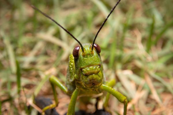 Por dónde y cómo respiran los insectos - Por dónde respiran los insectos - tipos de respiración