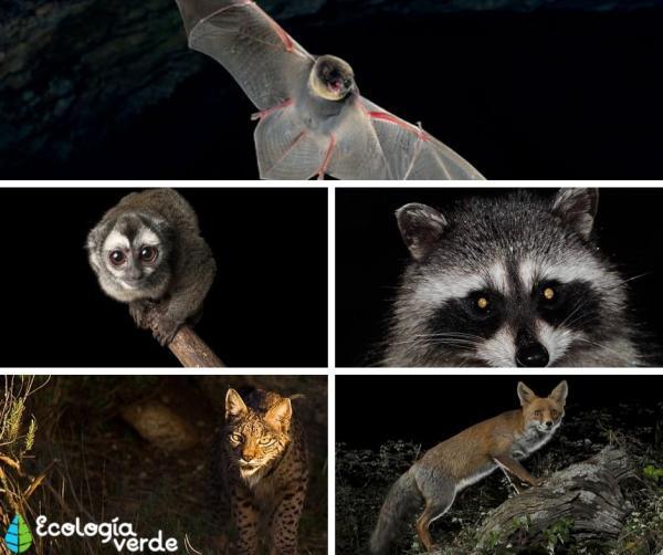 Animales nocturnos y diurnos: lista y fotos - Cuáles son los animales nocturnos: lista de ejemplos