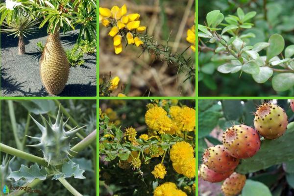 Plantas con espinas - Otras plantas con espinas
