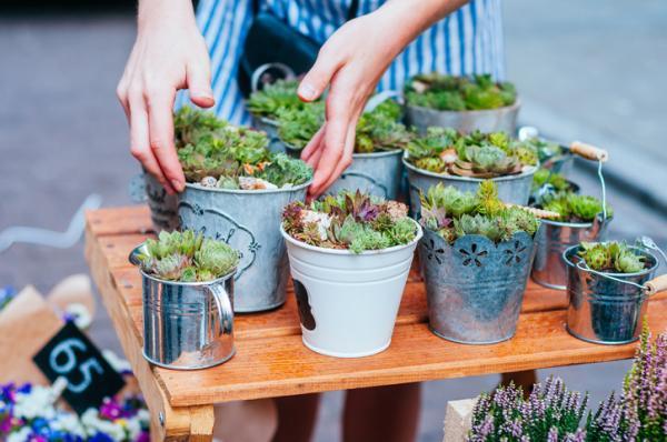 Cuidados de las suculentas - Sustrato y abono para suculentas